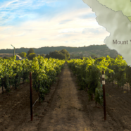 "Oak Knoll District – Napa Valley's ""Sweet Spot"""