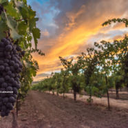 Napa Valley's Most Diverse Wine Growing Appellation